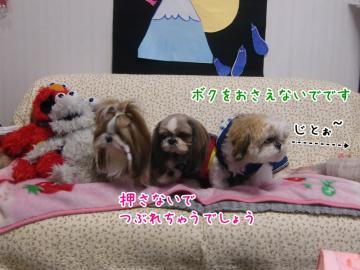 CIMG4624_3.jpg