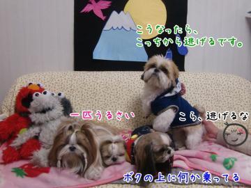 CIMG4627_3.jpg