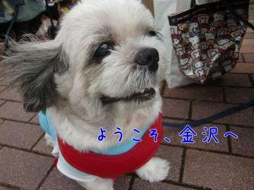 CIMG9345_3.jpg