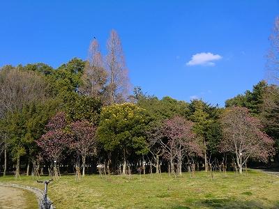 庄内緑地公園 11/03/29