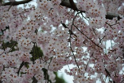 東山植物園 11/04/03