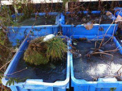 凍る飼育水