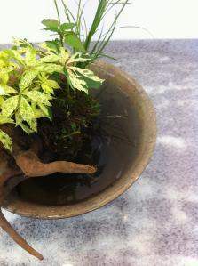 斑入りアメリカツタ盆景鉢