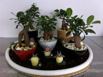 トトロの木苗木