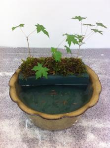 盆景メダカ鉢