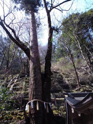貴船神社 奥の院 木