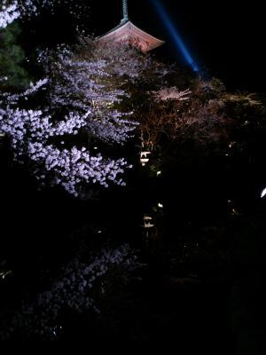 京都 水面の桜
