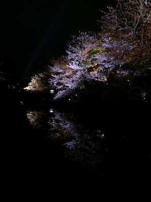 水面の桜 2