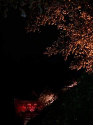 やっと夜桜