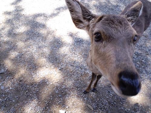 2010 奈良鹿