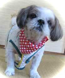 愛犬のルビー