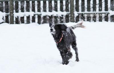 雪のドッグラン*ミミ