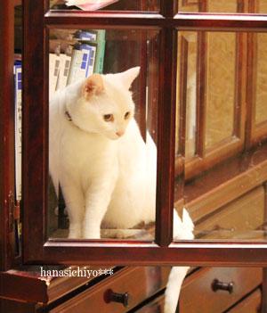 ティナ・深窓のお嬢