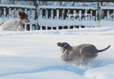 アッシュ雪の中