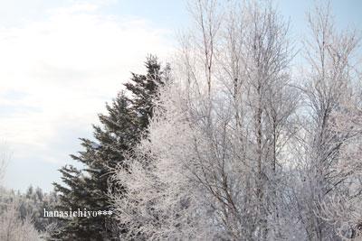 凍った木々