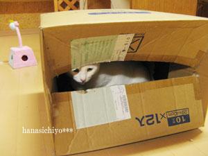 ティナ・捨て猫ごっこ
