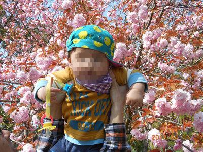 桜とそう君