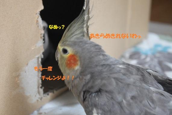 え~っと・・