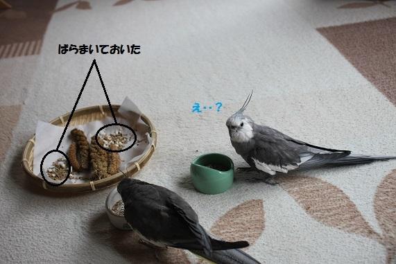 ばらまき~