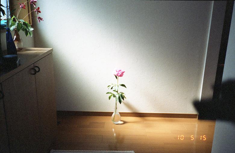 10052517.jpg