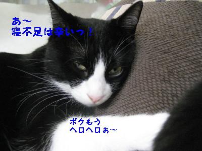 IMG_8590_20100624092231.jpg