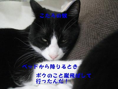 IMG_8602.jpg