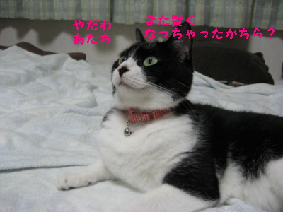 IMG_8650.jpg
