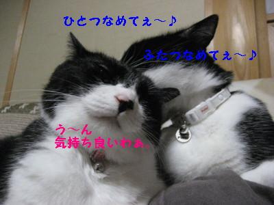IMG_8676.jpg