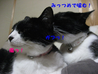 IMG_8677.jpg