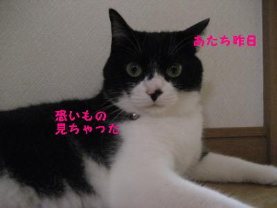 IMG_8694.jpg