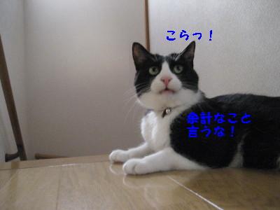 IMG_8703.jpg