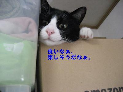 IMG_8731.jpg