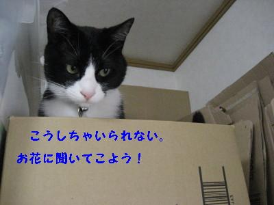 IMG_8736.jpg