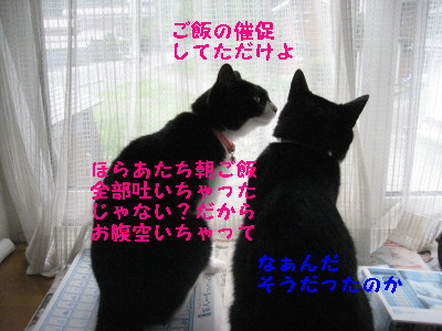 IMG_8745.jpg