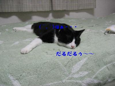IMG_8747.jpg