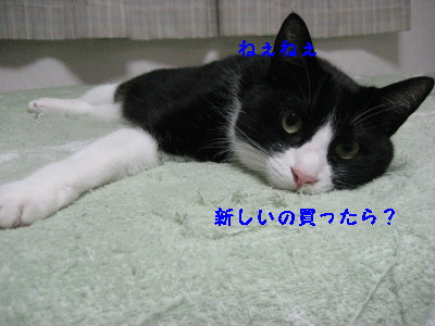 IMG_8752_20100713100545.jpg