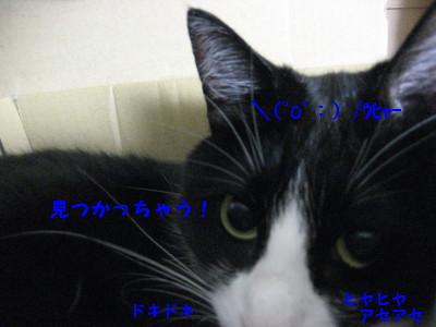IMG_8827.jpg
