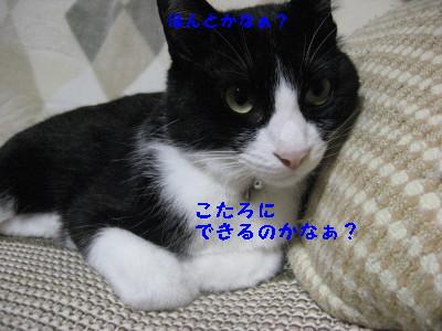 IMG_8873.jpg