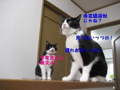 IMG_8989_20100726105942.jpg