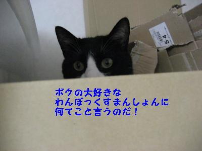IMG_9017.jpg