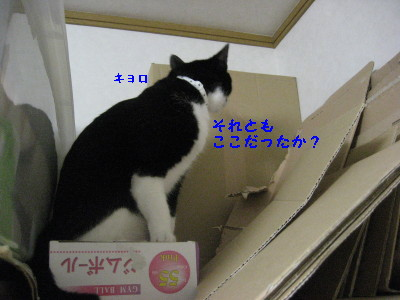 IMG_9024_20100729084109.jpg
