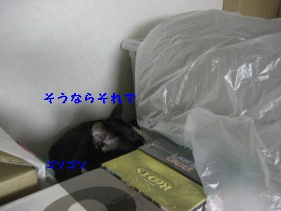IMG_9036.jpg