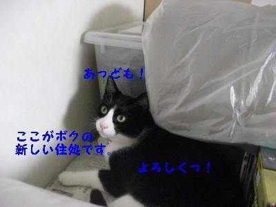 IMG_9045.jpg