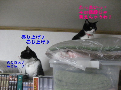 IMG_9048.jpg