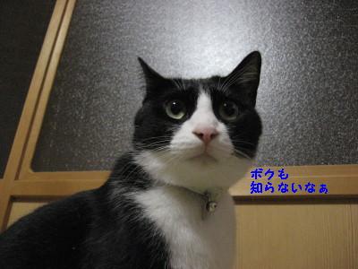 IMG_9174.jpg