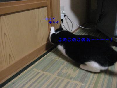 IMG_9183.jpg
