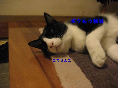 IMG_9249_20100824104931.jpg