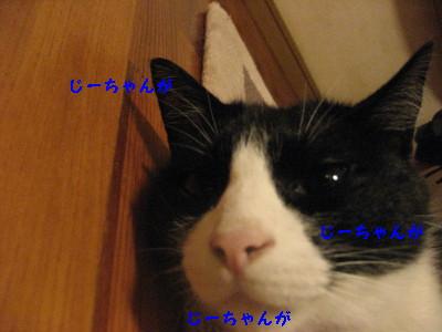 IMG_9250_20100824104930.jpg