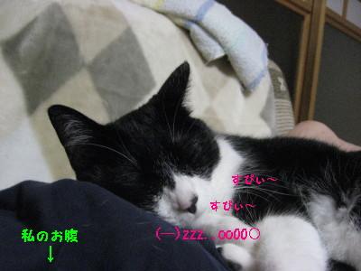 IMG_9356_20100821085103.jpg