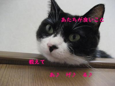IMG_9420.jpg